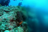 Large quantities of fresh water are mixed with the sea creating a halocline